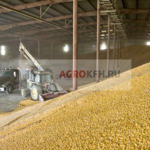 Ток для зерна