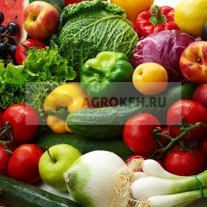 Условия хранения овощей и фруктов