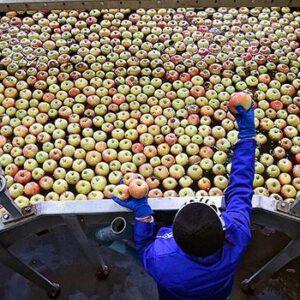 Фруктохранилище для яблок
