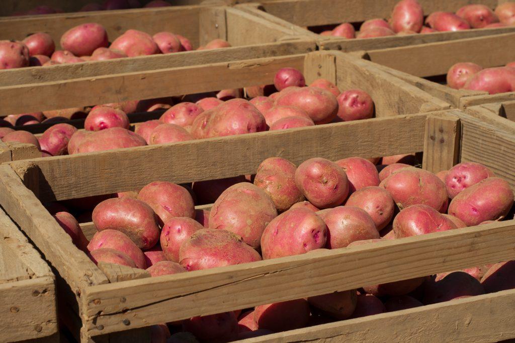 правильная закладка для хранения картофеля