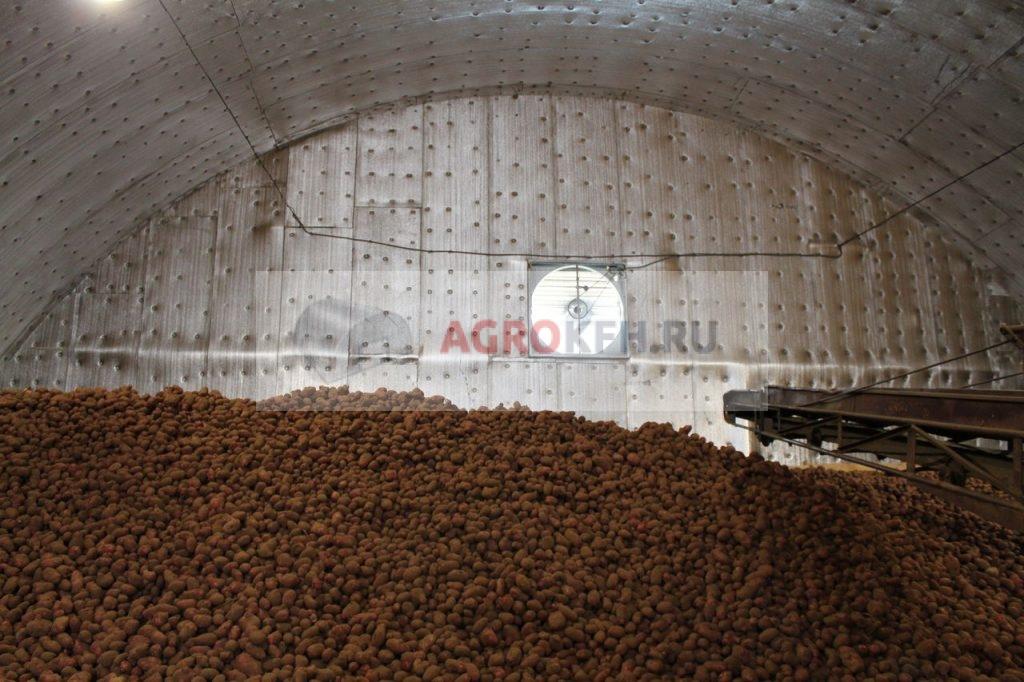Картофель и лук в овощехранилище